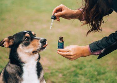 ペットにCBDを与える飼い主について